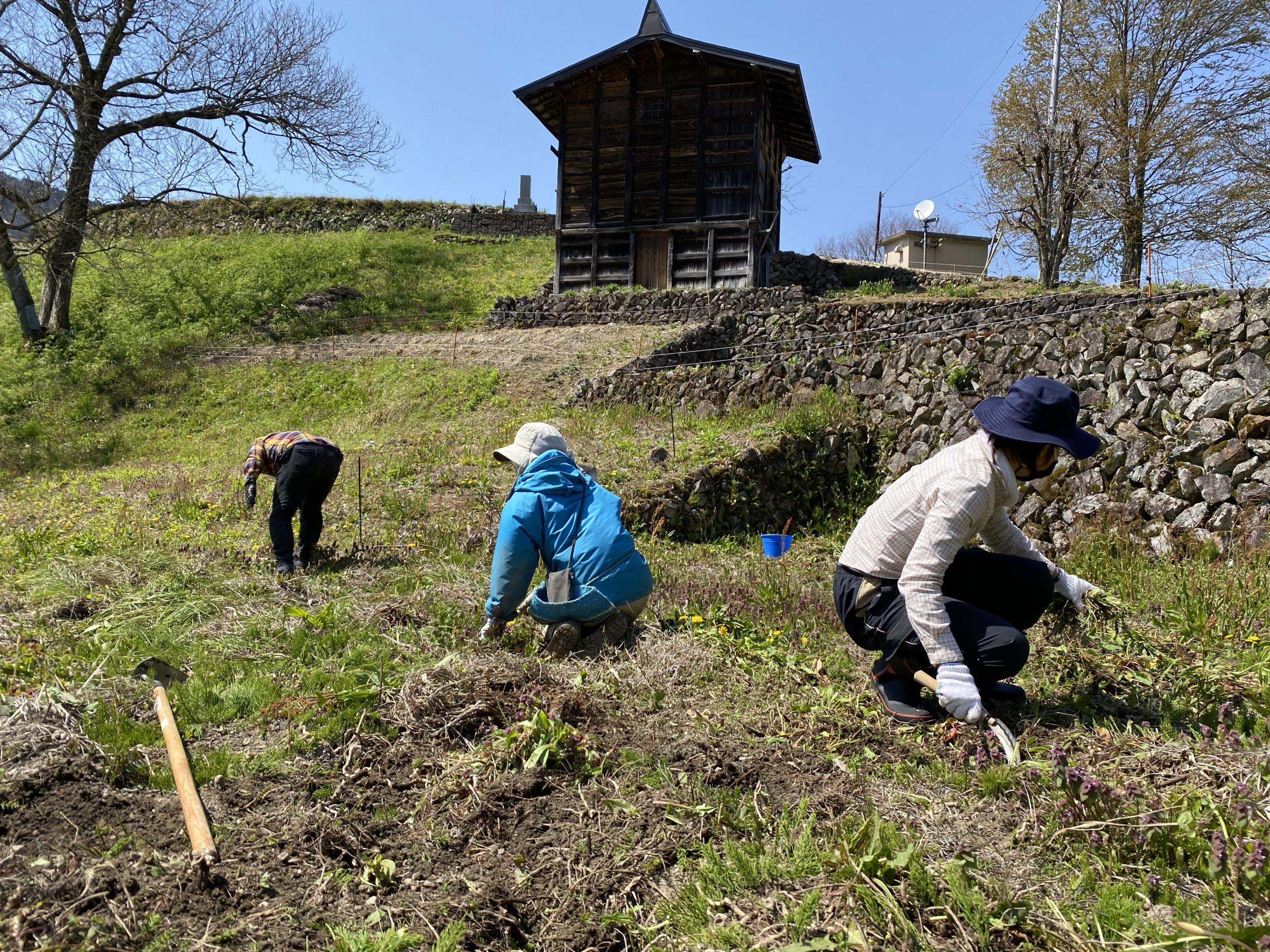 飛騨市種蔵村民と地元有志にてmyみょうが畑のエリアの草刈りが行われました