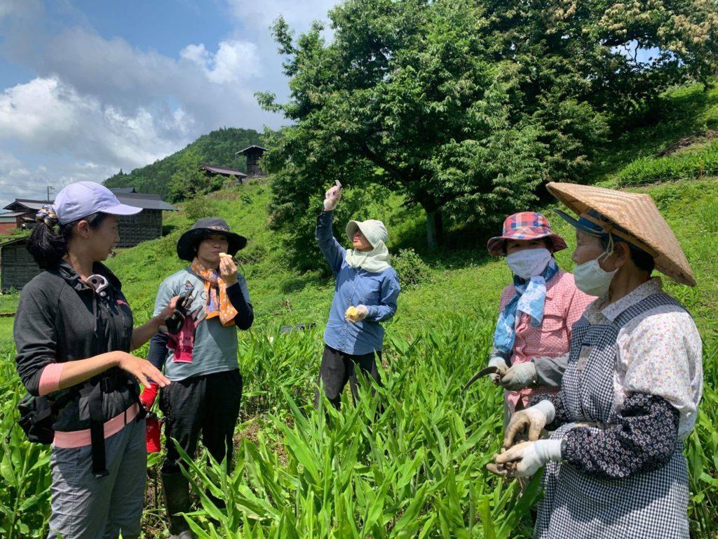 【8月1日開催】種蔵の景観を維持しよう!〜石積みの草取り編②!
