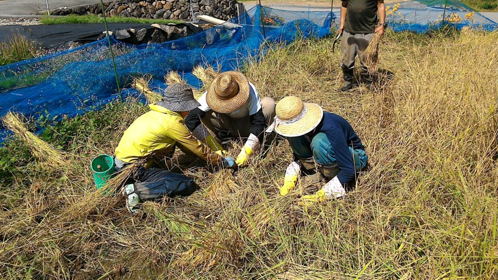 【7月25日開催】自然の中でエクサ(e草)サイズ!有機農業のお手伝いをしよう!