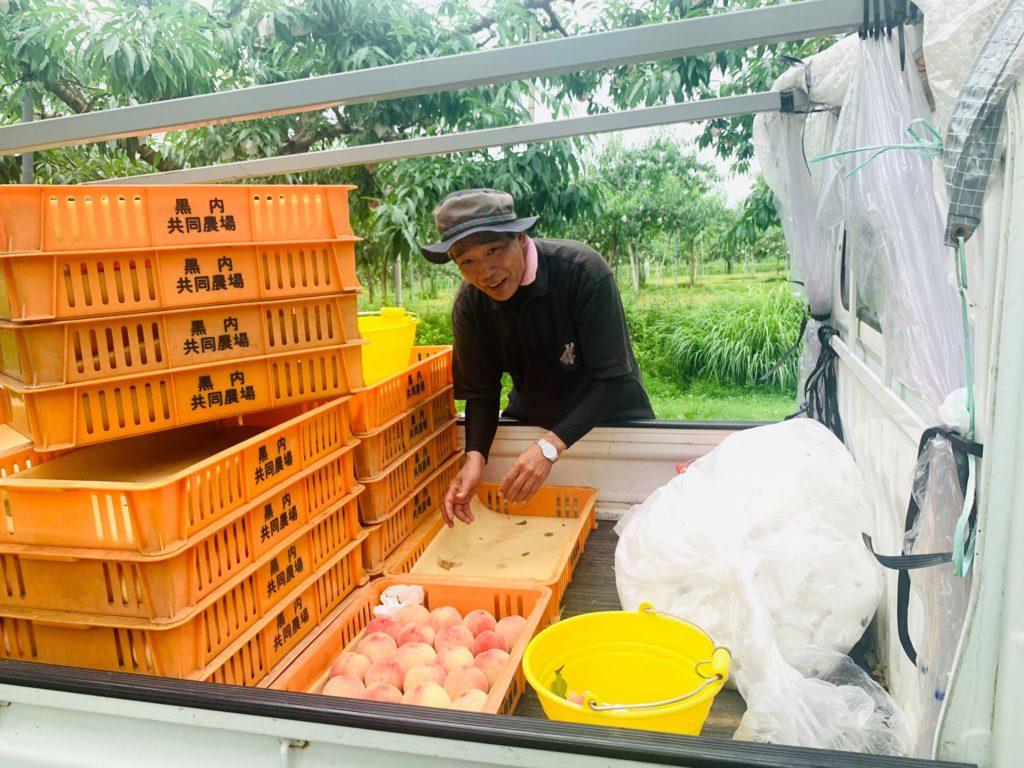 『飛騨の桃』収穫・出荷のお手伝い♪活動レポート