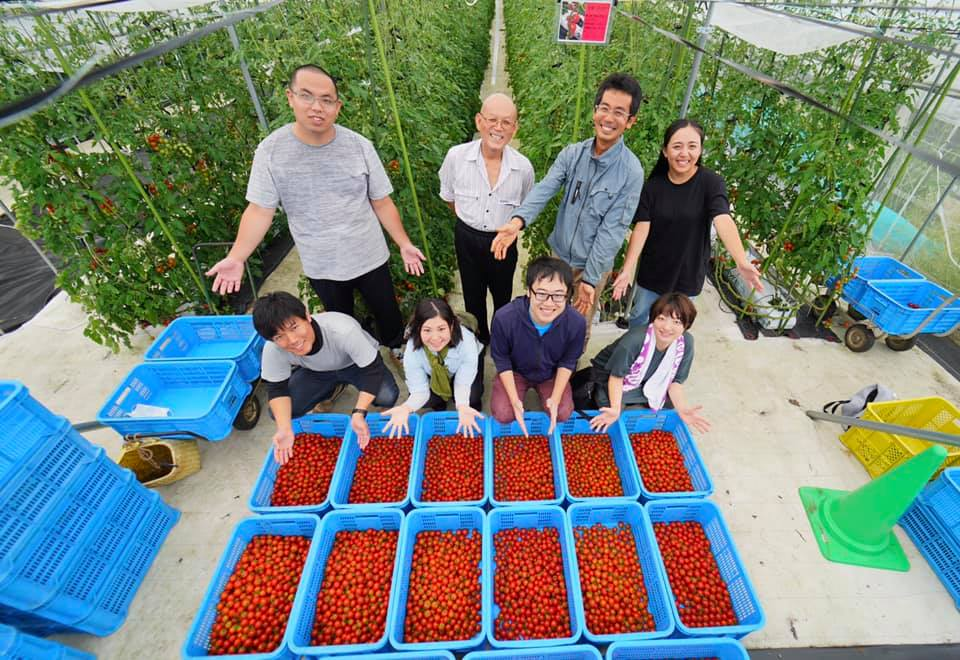 大人のための農業体験~池田農園でミニトマト狩り~
