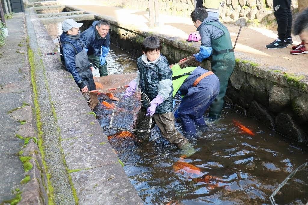 飛騨古川冬の風物詩『瀬戸川の鯉の引越し2021』お手伝い!