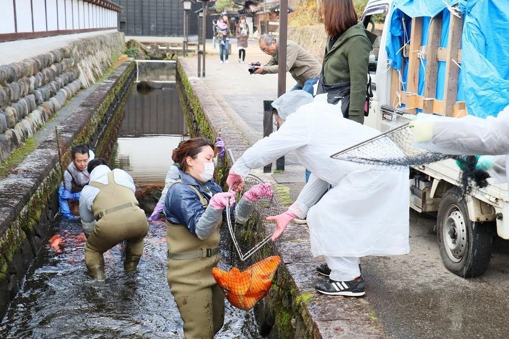 飛騨古川冬の風物詩「瀬戸川の鯉」引越しのお手伝い!