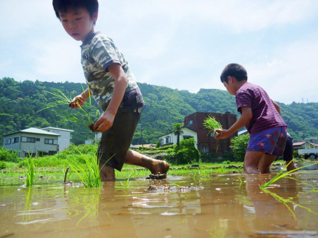 【飛騨市内在住者限定】飛騨コシヒカリの田植えのお手伝い!子連れOK♪家族参加OK♪