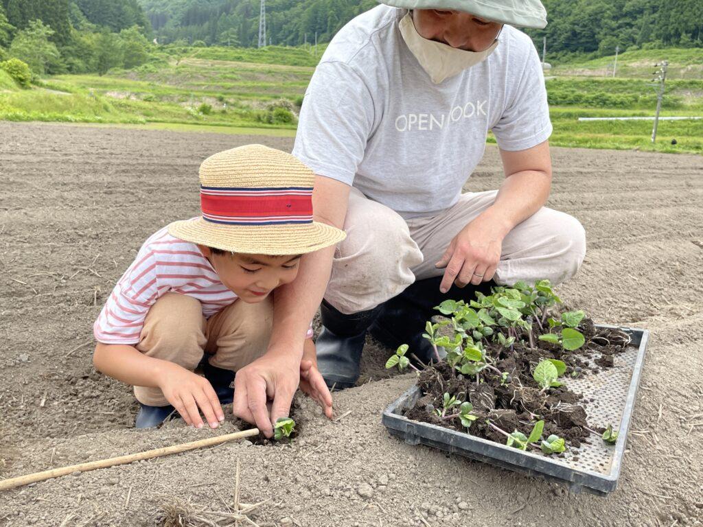ソヤ畦畑『大豆の苗の植え付け』お手伝い!【第2弾】