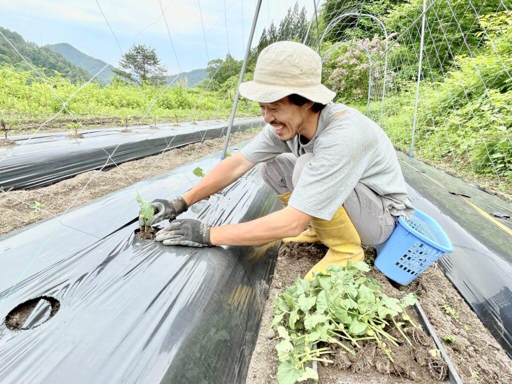 【飛騨市内在住者限定】ソヤ畦畑『大豆の苗の植え付け』お手伝い!