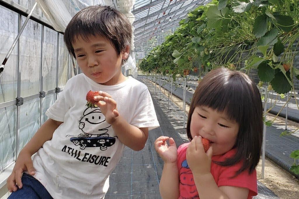 【飛騨市民限定】池田農園『イチゴ苗の植付け』のお手伝い!