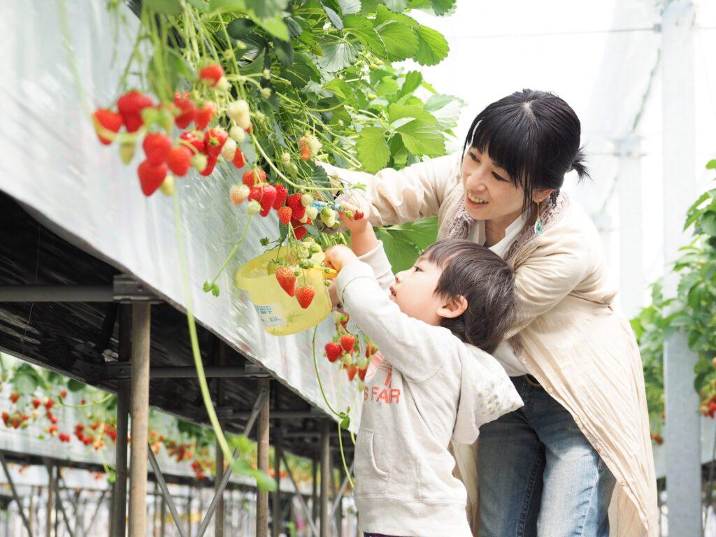 【飛騨市民限定】今冬オープン♪池田農園『イチゴ狩り農園の開設準備』のお手伝い!