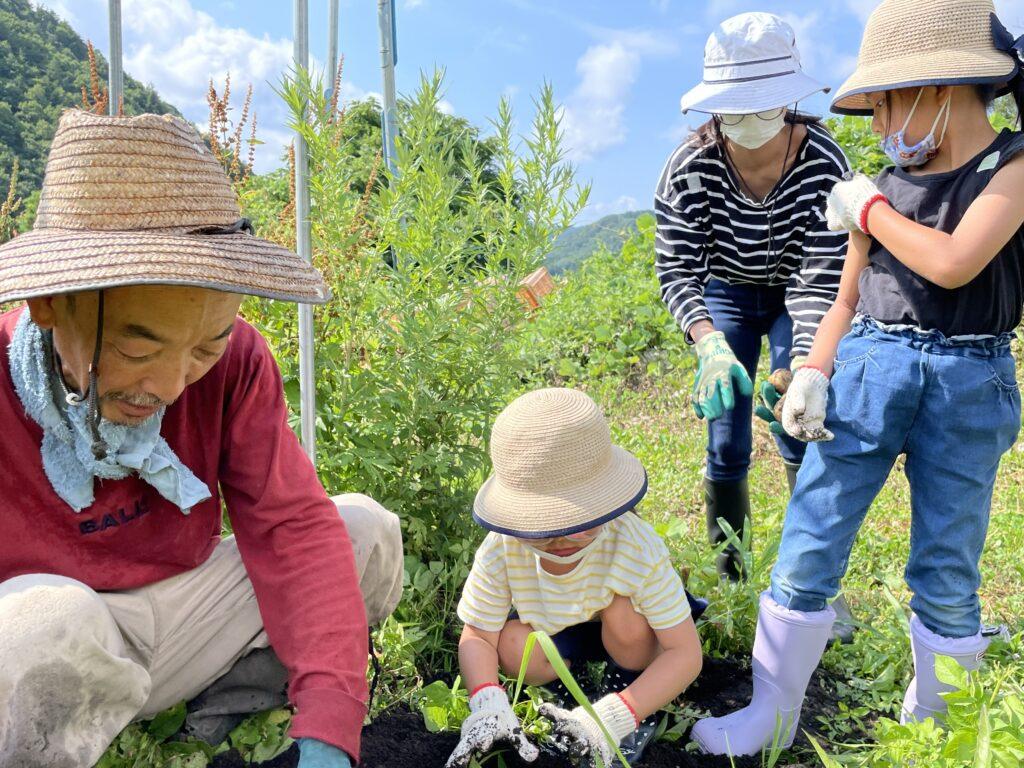 【急募】ありがとうファーム『人参畑の草取り』のお手伝い!家族参加、子連れ参加OK♪