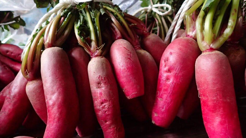 【飛騨市民限定】工房すなか『飛騨の伝統野菜赤カブの間引き』のお手伝い!子ども参加もOK♪
