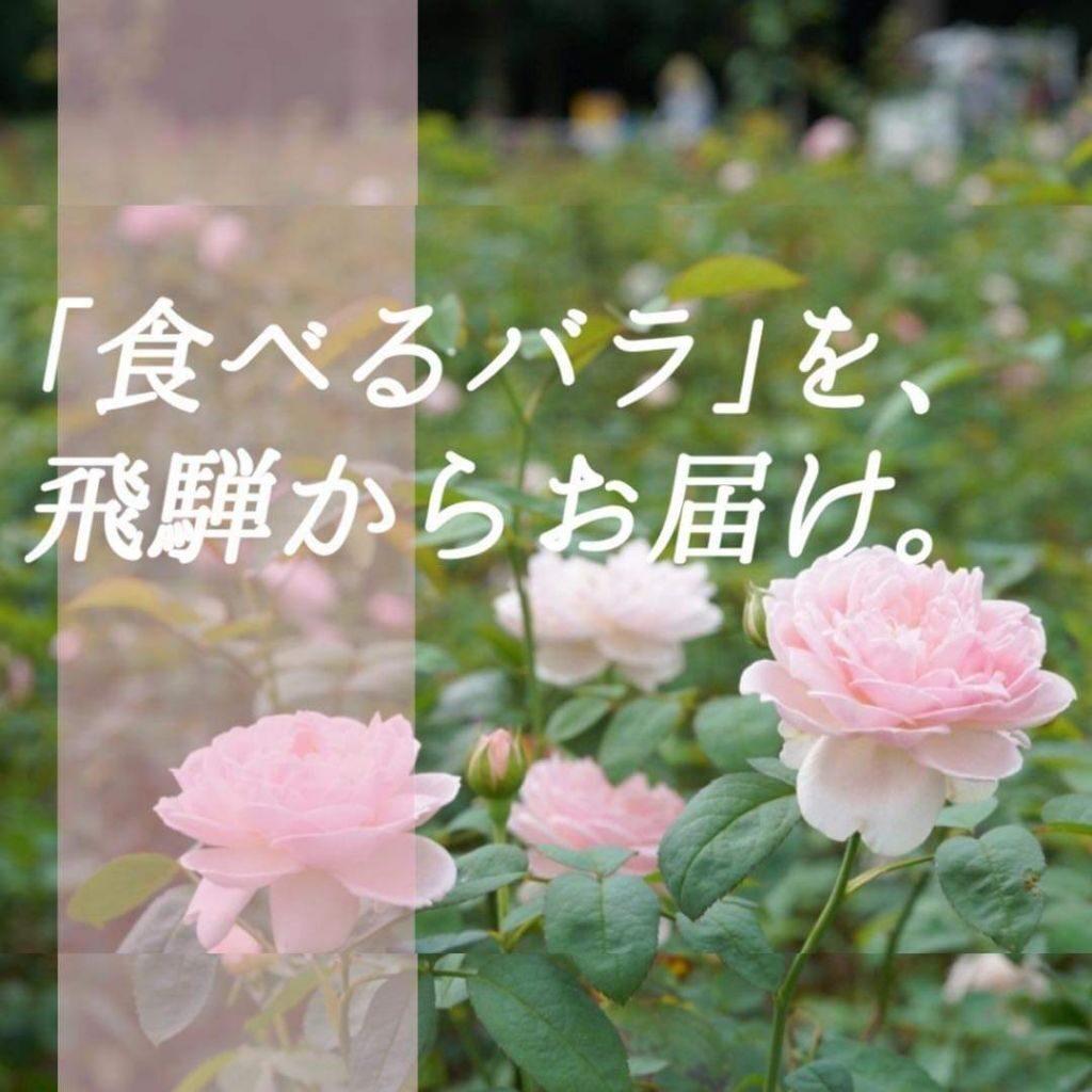 「#食べるバラ」で日本をバラ色に!クラウドファンディングスタート!無農薬の食べるバラスイーツ&森を飛騨からお届け♪